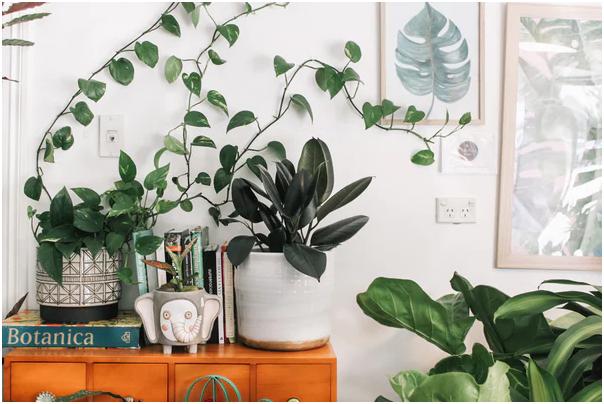 Spiritual Plants