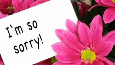 What Flowers to Send while Saying Sorry or Thank You